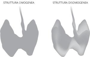 struttura tiroide